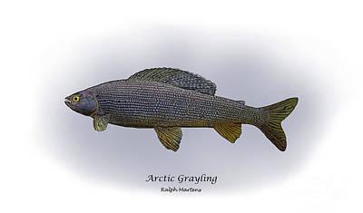 Arctic Grayling Print by Ralph Martens