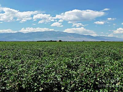 Mountain Digital Art - Arizona Cotton Field by Methune Hively