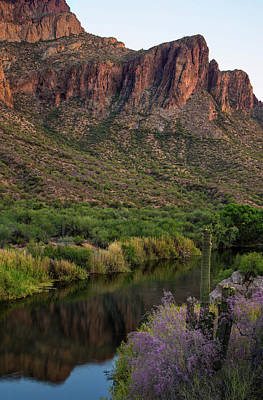 Mirror Photograph - Arizona Spring Ironwood With Salt River Reflections by Dave Dilli