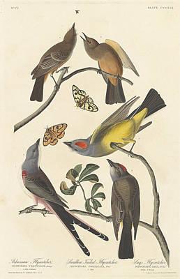 Flycatcher Painting - Arkansaw Flycatcher, Swallow-tailed Flycatcher And Says Flycatcher by John James Audubon