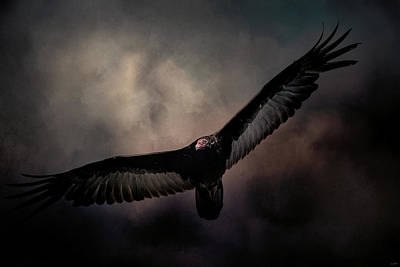 Vulture Photograph - Arrival Of The Vulture by Jai Johnson