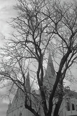 Natuure Photograph - Art 5 by Evil Shadows
