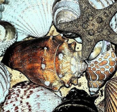 Art Shell 3 Print by Stephanie Troxell