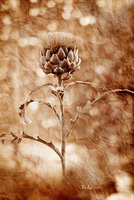 Aged Photograph - Artichoke Bloom by La Rae  Roberts