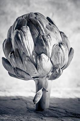 Artichoke Photograph - Artichoke by Maggie Terlecki