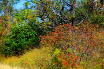 Artistic Fall Sumac Original by Linda Phelps