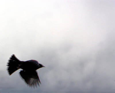 Black Crowes Photograph - As The Crow Flies by Nick Gustafson