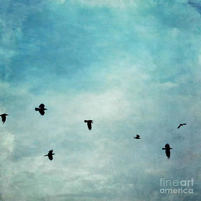 Raven Photograph - As The Ravens Fly by Priska Wettstein