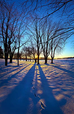 Unity Photograph - As The Sun Misses The Flower In The Depths Of Winter by Phil Koch