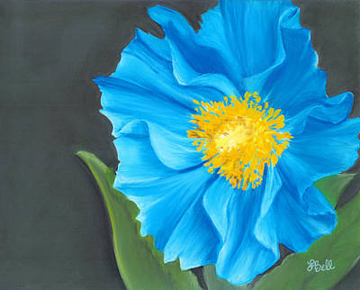 Poppies Drawing - Asian Blue by Laura Bell