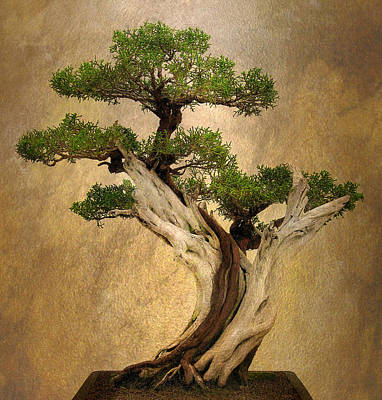 Grow Digital Art - Asian Bonsai by Jessica Jenney