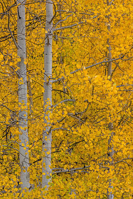 Best Photograph - Aspen Autumn by Gary Migues