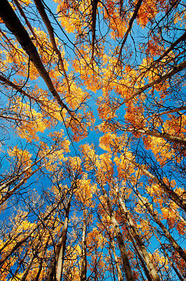 Vivid Fall Colors Photograph - Aspen Filled Sky by Todd Klassy