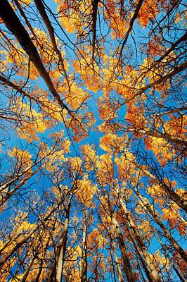 Aspen Filled Sky Print by Todd Klassy