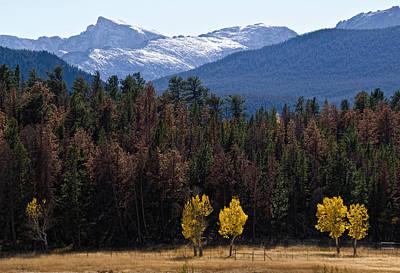 Aspen Photograph - Aspen In The Colorado Rockies by Dave Dilli