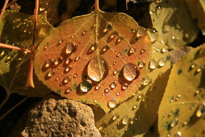 Photograph - Aspen Leaf by Crystal Magee