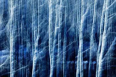 Abstract Movement Photograph - Aspen Magic by Todd Klassy