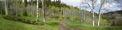 Gigapan Photograph - Aspens In Spring by Dave Belcher