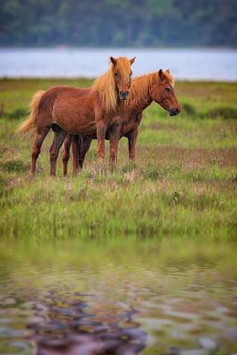 Assateague Ponies In The Marsh Print by Rick Berk
