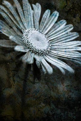 Aster On Rock Print by  Onyonet  Photo Studios