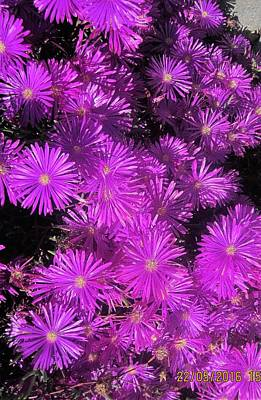 Aster Drawing - Asters At North Conway by Paul Meinerth
