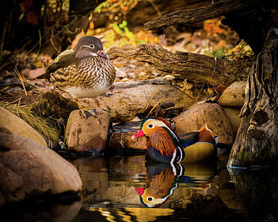 With Red. Photograph - At The Waters Edge - Mandarin Ducks by TL Mair