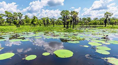 Louisiana Photograph - Atchaflaya Basin Reflection Pool by Andy Crawford