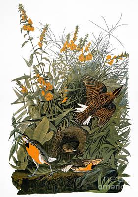 Meadowlark Photograph - Audubon: Meadowlark by Granger