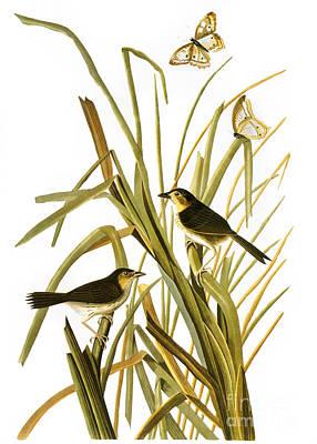 Audubon: Sparrow, (1827) Print by Granger