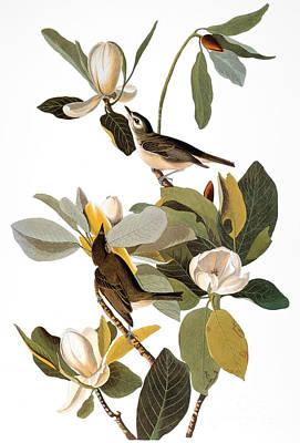 Artflakes Photograph - Audubon: Vireo by Granger