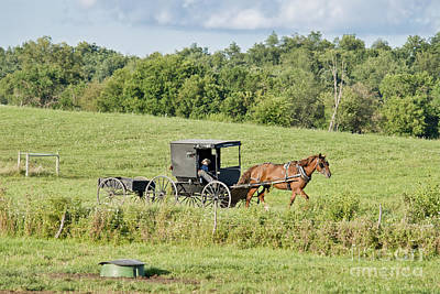 Amish Photograph - August Buggy Shipshewana by David Arment