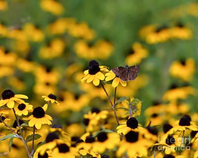 Butterfly Photograph - August Duskywing by Kerri Farley