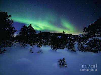 Polar Aurora Photograph - Aurora Borealis Over Forramarka Woods by Arild Heitmann