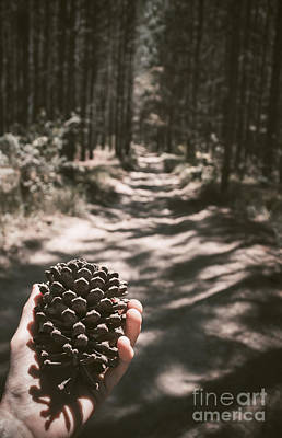 Gather Photograph - Australian Explorer Gathering Pine Cones by Jorgo Photography - Wall Art Gallery