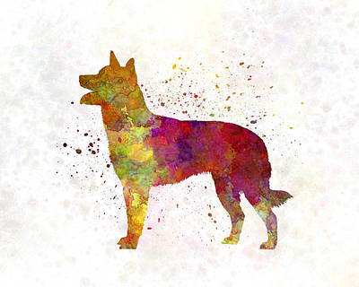 Australian Kelpie In Watercolor Print by Pablo Romero