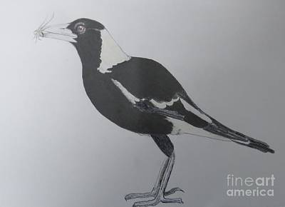 Magpies Drawing - Australian Magpie In Pencil by Evie Hanlon