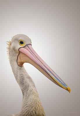 Australian Pelican Print by Wim Lanclus