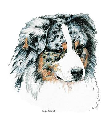 Pop Art Drawing - Australian Shepherd, Blue Merle by Kathleen Sepulveda