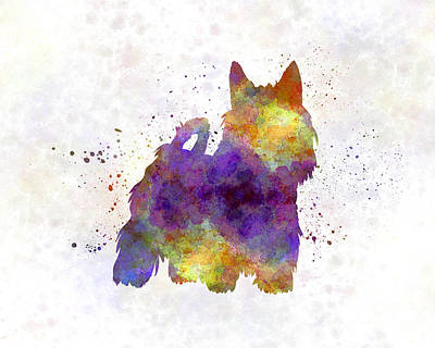 Silky Terrier Painting - Australian Silky Terrier In Watercolor by Pablo Romero