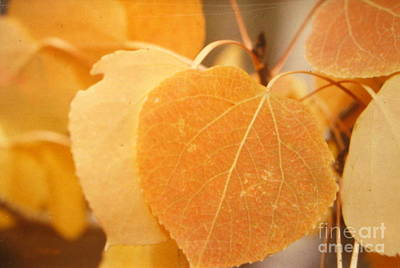Autumn Aspen Print by Shasta Eone
