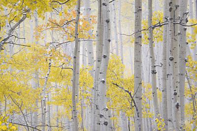 Color Photograph - Autumn Aspens 2 by Leland D Howard