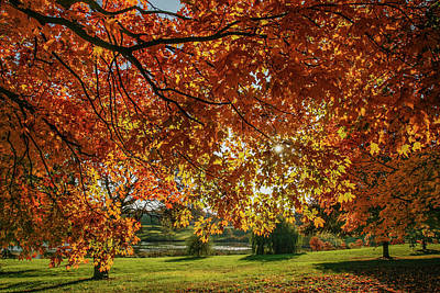 Autumn At The In Forest Park St Louis Missouri Print by Garry McMichael
