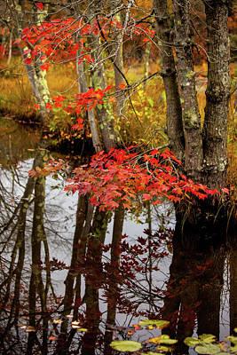 Autumn At The Pond Print by Karol Livote
