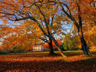 Autumn Blaze Print by Dianne Cowen