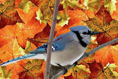 Nature An Bird Mixed Media - Autumn Blue Jay by Debra     Vatalaro