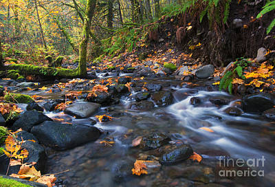 Moss Photograph - Autumn Canyon by Mike Dawson