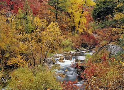 Cottonwood Photograph - Autumn Color by Leland D Howard
