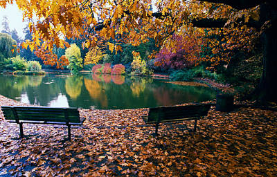 State Parks In Oregon Photograph - Autumn Color Trees And Fallen Leaves by Panoramic Images