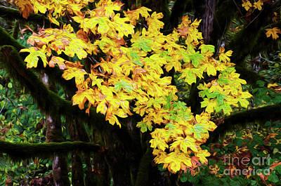 Of Autumn Photograph - Autumn Colors by Bob Christopher