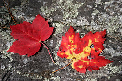 Self Discovery Photograph - Autumn Colors by Kate  Leikin
